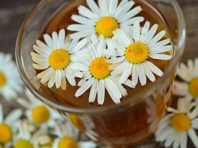 Травяной чай может вызывать рак— Ученые