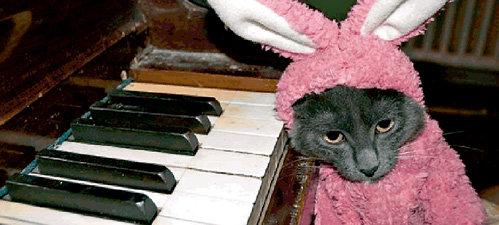 Котик и кролик - в одном флаконе