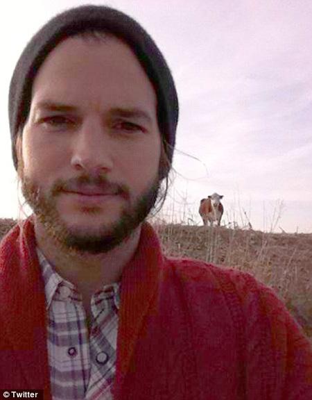 Снимок себя с коровами Эштон КАТЧЕР поместил сегодня в