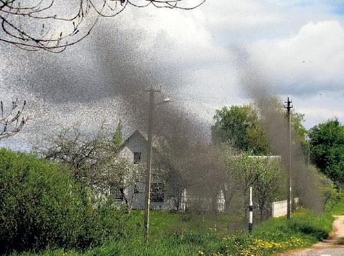 На счастье жителей белорусской деревни Никольцы, тьма-тьмущая комаров только пугала, но не кусала