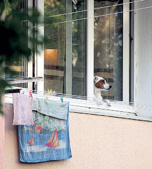Верный пес ГАЛУСТЯНА Бучо каждый день ждёт хозяина домой