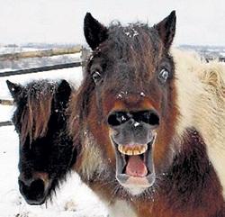 В России диетическая конина на треть дороже говядины и её появление в фарше вряд ли огорчило бы народ