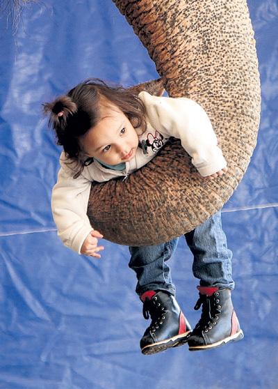 Хобот у слона - точно рука с пальцами: может легко подхватить с земли не только ребенка, но даже монетку. Фото Сергея ГАПОНА/«Комсомольская правда»