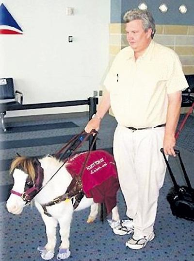 Лошадка-поводырь - ответственная и сообразительная