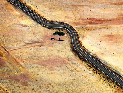 Советский лозунг «Спаси дерево!» у нас позабыли, а в других странах - нет