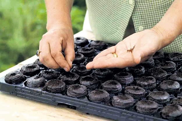 Будущий урожай можно посеять в торфяные таблетки...