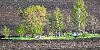 ХУТОРСКОЕ КЛАДБИЩЕ: немецких могил почти не осталось