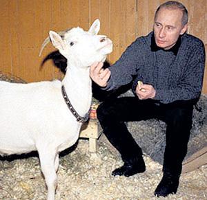 Коза Сказка прописалась в Ново-Огареве