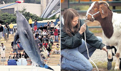 Дельфин и козёл вновь покоряют воду и сушу