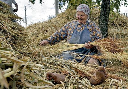 Прямо возле дороги 78-летняя Ксения ШАЙКИНА обдирает остатки листьев со стеблей сорго