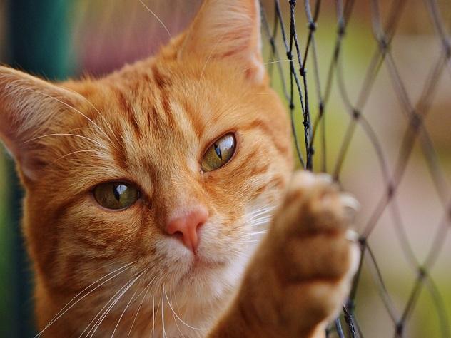 Сайт снепрерывным мурлыканьем кота появился всети интернет