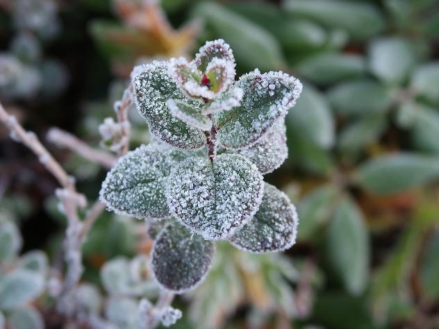 Встоличном регионе зафиксированы первые заморозки
